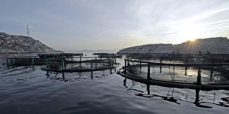 Senate Aquaculture Report Calls For More Transparency For $1-Billion Industry - Huffington Post Canada | Aquaculture Directory | Scoop.it