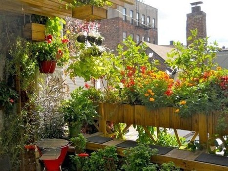 All what you need to know to create and maintain your Own Edible Rooftop Garden | Organic Gardening in Colorado | Scoop.it