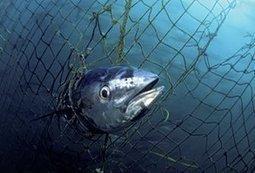Humanity driving 'unprecedented' marine extinction | Wenlock Edge | Scoop.it