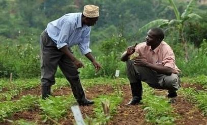 Mali : 15% du budget à l'agriculture | Questions de développement ... | Scoop.it