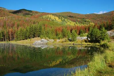 New study details global warming impact to forests   La parole de l'arbre   Scoop.it