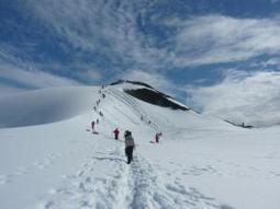 Antarctic Wildlife: Learn about the difference species of the region   Antarctica   Scoop.it