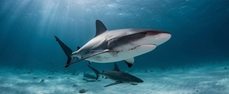 How to Win a Deal on Shark Tank: The Anatomy of a Perfect Business Pitch [Infographic] | Prozac Moments | Scoop.it