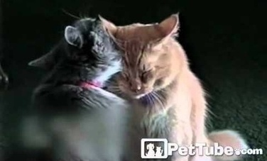 Cats Share Some Love (Video) | This Gives Me Hope | Scoop.it