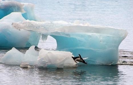 Coincés par un iceberg, une colonie de manchots meurt de faim sur la banquise en Antarctique   Biodiversité   Scoop.it