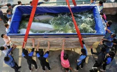 AN OPEN LETTER TO MANILA OCEAN PARK  | Earth Island Philippines | Makamundo (Earthly) | Scoop.it