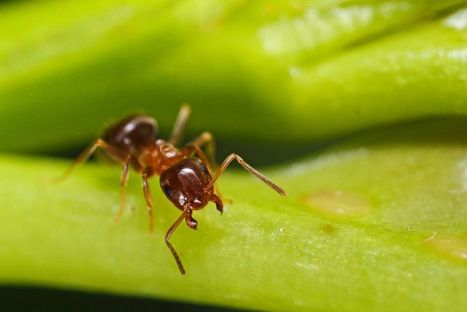 Ants Maintain 'Toilets' in Their Nests, First-Ever Study Shows | All About Ants | Scoop.it