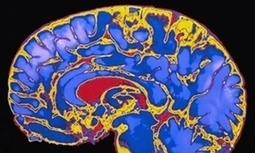 Childhood stimulation key to brain development, study finds | Science | The Guardian | gifted and talented | Scoop.it