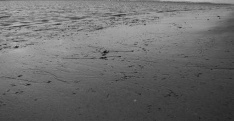 Le bassin d'Arcachon, mon lieu de vacances préféré… - Géo Ado | Lège Cap Ferret | Scoop.it