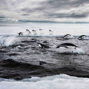 Saving the Southern Ocean: China, Russia Block Plan to Protect Antarctic Waters - SPIEGEL ONLINE | Water affairs | Scoop.it