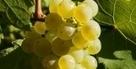 Vin : La percée des petits producteurs australiens - Le Figaro L'Avis du Vin | Autour du vin | Scoop.it