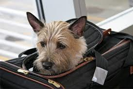 Some Major Airlines Are Going Pet Friendly | Your #1 Source For Luggage Covers | Articles !!! | Scoop.it