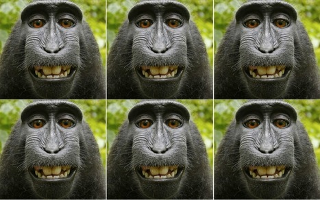The monkey selfie case gets new life in Federal Appeals Court   INTRODUCTION TO THE SOCIAL SCIENCES DIGITAL TEXTBOOK(PSYCHOLOGY-ECONOMICS-SOCIOLOGY):MIKE BUSARELLO   Scoop.it