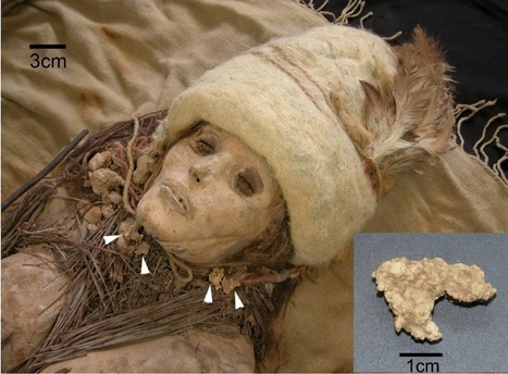 Mummies' Milk: World's Oldest Cheese Found in China | Quite Interesting News | Scoop.it