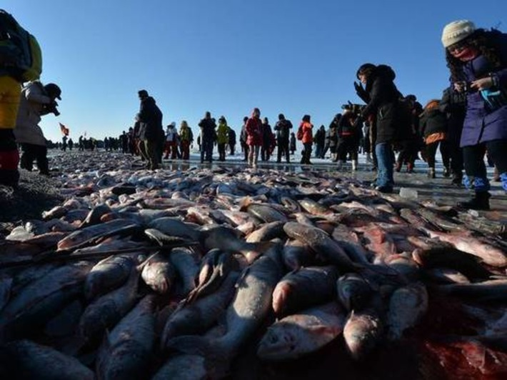 Amazing aerial footage shows 100,000 people at China's ice fishing festival | The Independent | Kiosque du monde : Asie | Scoop.it