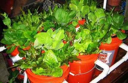 DIY Aquaponics System With 5 Gallon Buckets - SHTF Preparedness | Garden Ideas by Team Pendley | Scoop.it