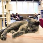 Paris : Miaou ! Gros carton pour le premier bar à chats | Sortir à Paris | Scoop.it