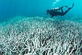 Coral bleaching: the facts   Ecosystems at Risk   Scoop.it