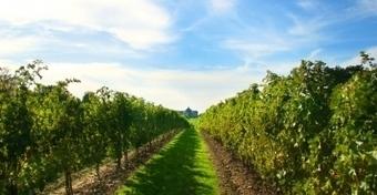 Un drone qui surveille la vigne pour mieux la protéger. | Chimie verte et agroécologie | Scoop.it
