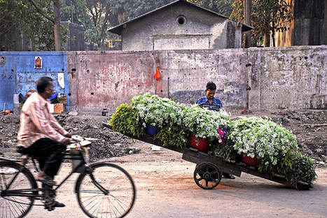 Buds of Hope - Policy Innovations | Floriculture in India | Scoop.it