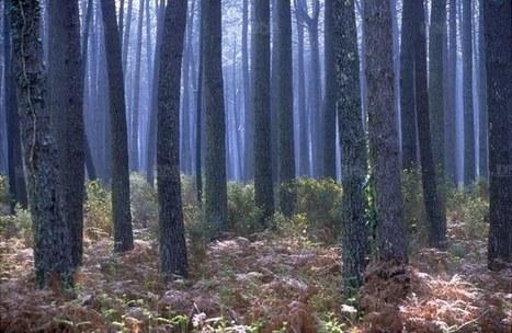 Les forêts en danger, le climat aussi | Veille en dilettante | Scoop.it