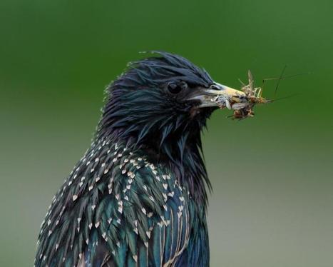 'Bee-harming' pesticides also hit bird populations, study reports | Sustain Our Earth | Scoop.it