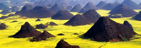 Les champs de colza fleuri de Luoping, un voyage sublime | Actu Tourisme | Scoop.it