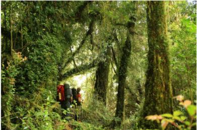 Women's Health > 2 increíbles rutas para hacer Trekking este verano | Senderismo sustentable | Scoop.it