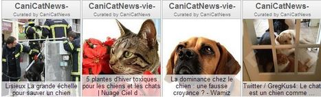 Vous pouvez aussi consulter nos autres rubriques | CaniCatNews-actualité | Scoop.it