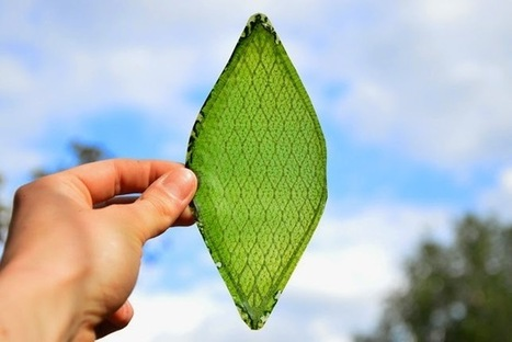 Inky Leaves: Plants in space number two   Erba Volant - Applied Plant Science   Scoop.it