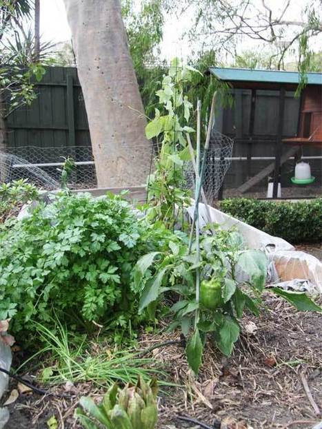 Wes Fleming shares his winter gardening tips - State of Green | Sustainable living | Scoop.it
