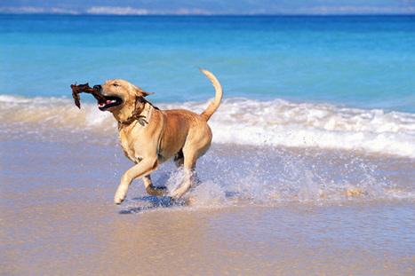 Regole e consigli per proteggere gli animali dal caldo estivo - YourSelf.it | Oltre il Cuore di Lucilla News | Scoop.it