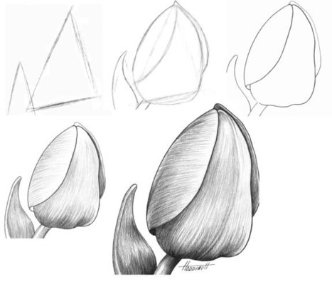 How to Draw a Tulip | Storytelling | Scoop.it