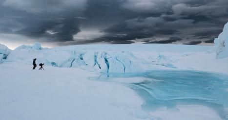 Hier soir, une rencontre magique dans le chaos des glaces #manchot #Antarctique | Arctique et Antarctique | Scoop.it