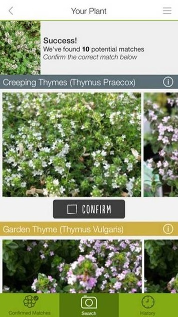 Review: Like That Garden app helps you ID flowers (sort of) | Garden apps for mobile devices | Scoop.it