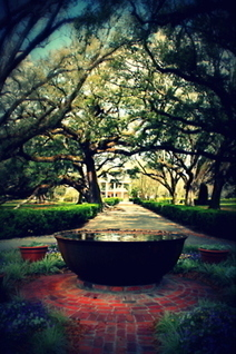 Layla: little-secret-garden: Oak Alley Plantation   Oak Alley Plantation: Things to see!   Scoop.it