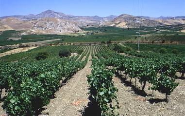 Sicilia | Sicilian wine online | Scoop.it