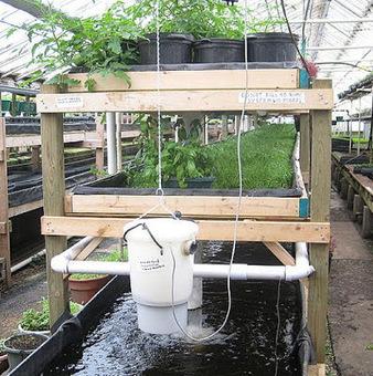 Advantages of Aquaponics System ~ Gardening ABC | Aquaculture Directory | Scoop.it