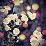 Photo Inspiration | LOMO | Scoop.it
