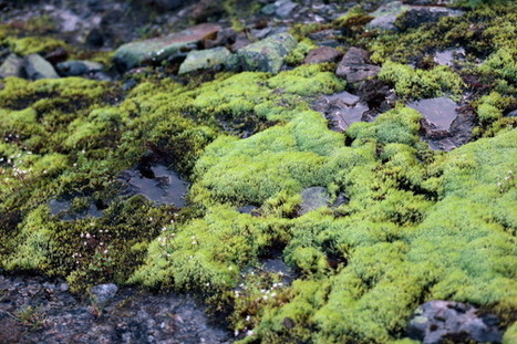 Study: How Moss Helped in Making the Earth Habitable | De Natura Rerum | Scoop.it