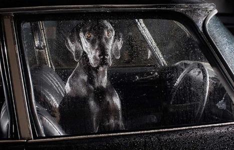 Retrata fotógrafo a perros esperando a sus dueños - Periódico Correo | La manada de Leo | Scoop.it