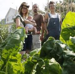 Tippecanoe Urban Farmers work city soil for delicious benefits - Journal and Courier | Vertical Farm - Food Factory | Scoop.it