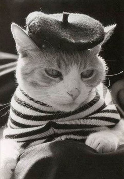 my cat board i live vicariously through with all my cat lady aspirations | Womens' Hats | Scoop.it