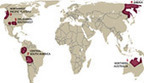 """Languages Racing to Extinction in 5 Global """"Hotspots""""   Collective intelligence   Scoop.it"""