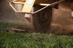 Stump grinding have to be made by professionals in Leominster, MA | A tree service by Big Beaver Stump Grinding. Service you can rely on | Scoop.it