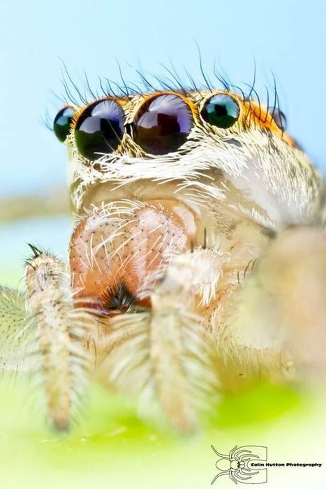Insects – 27 fascinating macro photos by Colin Hutton | Fotografia | Scoop.it