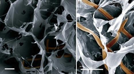 Harvard Scientists Create First Cyborg Flesh | Geek Therapy | Scoop.it