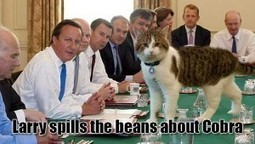 Larry The Cat Reveals What The Cobra Committee Meeting At Number 10 Are All About | News From Stirring Trouble Internationally | Scoop.it