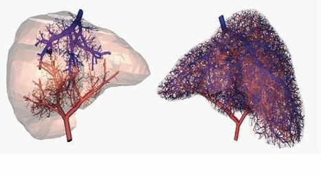 Researchers Now Able To 3D Print Working Blood Vessels | TechCrunch | Impression 3D | Scoop.it