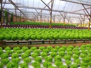 Agriculture in Panama is Adopting Aquaponics | Aquaculture Directory | Scoop.it